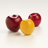 SA Stonefruit Product Photography (1)
