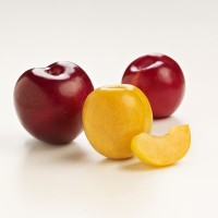 SA Stonefruit Product Photography (2)