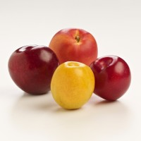 SA Stonefruit Product Photography